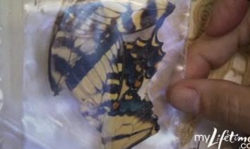 2009-12-17-butterflies.png
