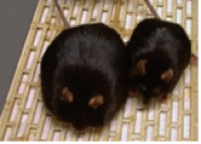 2009-12-31-Mice.png