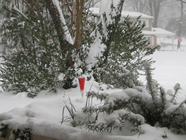 2010-01-01-Christmastime_Blizzard_2009024.jpg