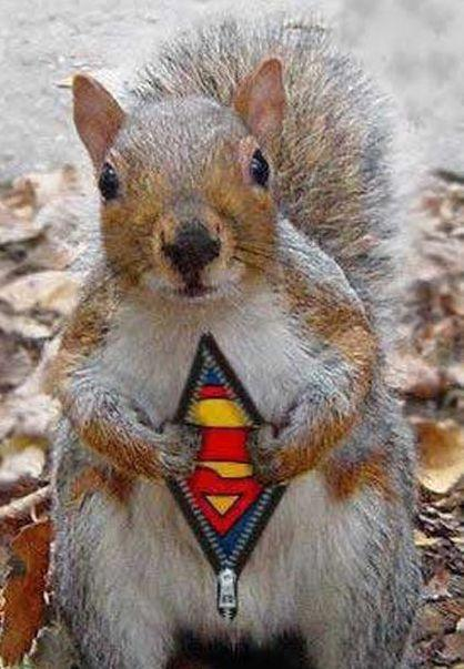 2010-01-09-super_squirrel.jpg