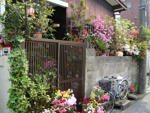2010-01-12-honcho_spring_flower_resi_t.jpg