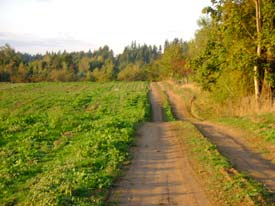 2010-01-12-ruralroad.jpg