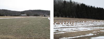 2010-02-17-row7.jpg