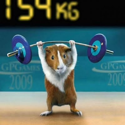 2010-02-28-olympicswithguineapigs0st5.jpg