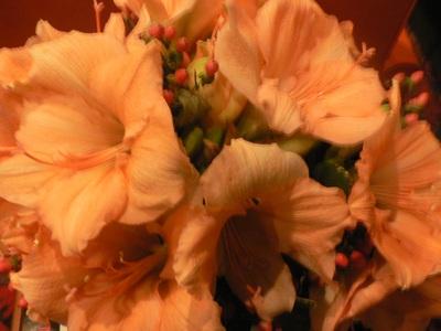 2010-03-02-P1050167lp.jpg