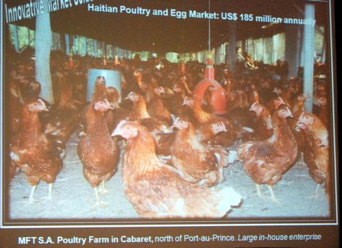 2010-03-11-chickens.jpg