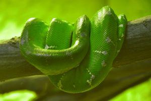 2010-03-12-snake.jpg