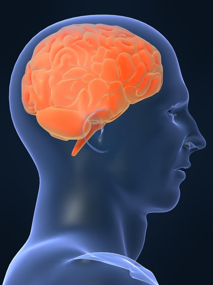 2010-03-14-Brain.jpg