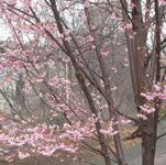 2010-03-29-IMG_4064.JPG