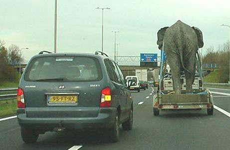 2010-04-01-transporting_an_elephant11953.jpg