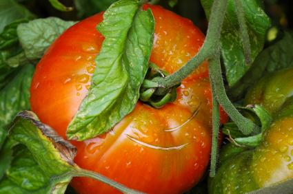 2010-04-07-tomato.jpg