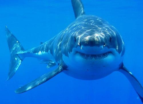 Калейдоскоп / Курьезы / Американцы женились в присутствии акул.