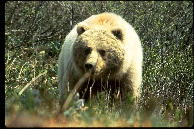 2010-04-08-GrizzlyFWS