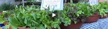 2010-04-12-salad.jpg