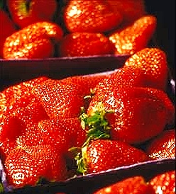 2010-04-12-strawberryboxes2.jpg