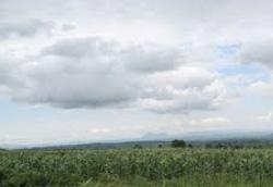 2010-04-19-corn5.jpg