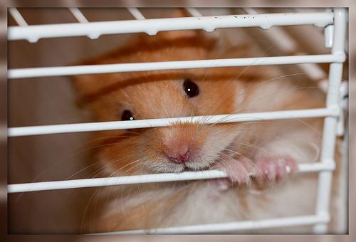 2010-04-20-hamster.jpg