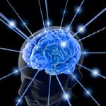 2010-04-29-brain2.jpg
