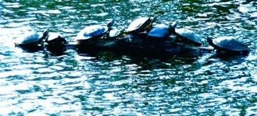 2010-05-03-turtles.JPG