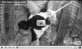2010-05-27-MFA_dairy_video.jpg