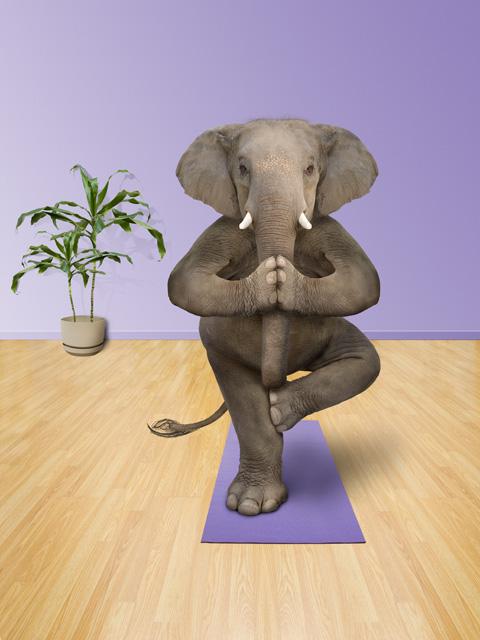 2010-06-06-Elephantyoga.jpg