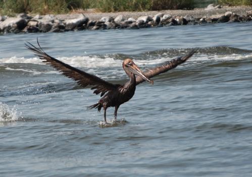 2010-06-09-crucifiedbird.jpg