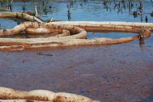 2010-06-09-snakeboom.jpg