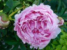 2010-06-14-flower.jpg