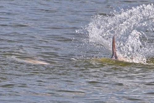 2010-06-20-dolphin2.jpg
