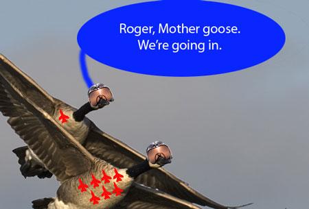 2010-07-14-Geese.jpg