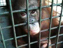 2010-07-19-cage.jpg