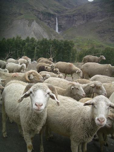 2010-07-21-ladakhwaterfall.jpg