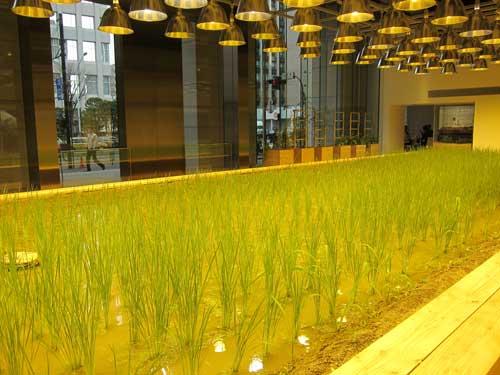 2010-07-31-pasona_rice_lobby.jpg