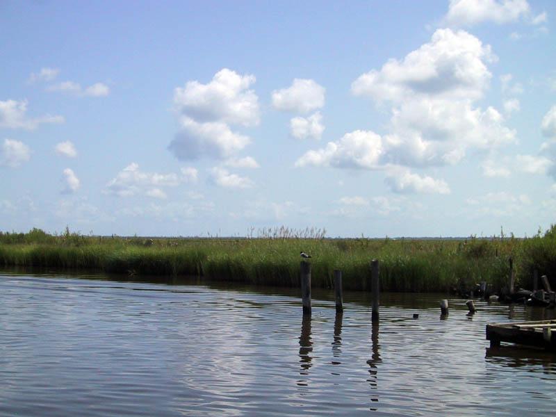 2010-08-02-marshes.jpg