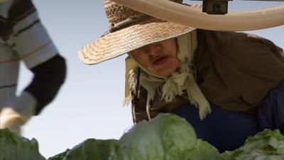 2010-08-04-lettuce.jpg
