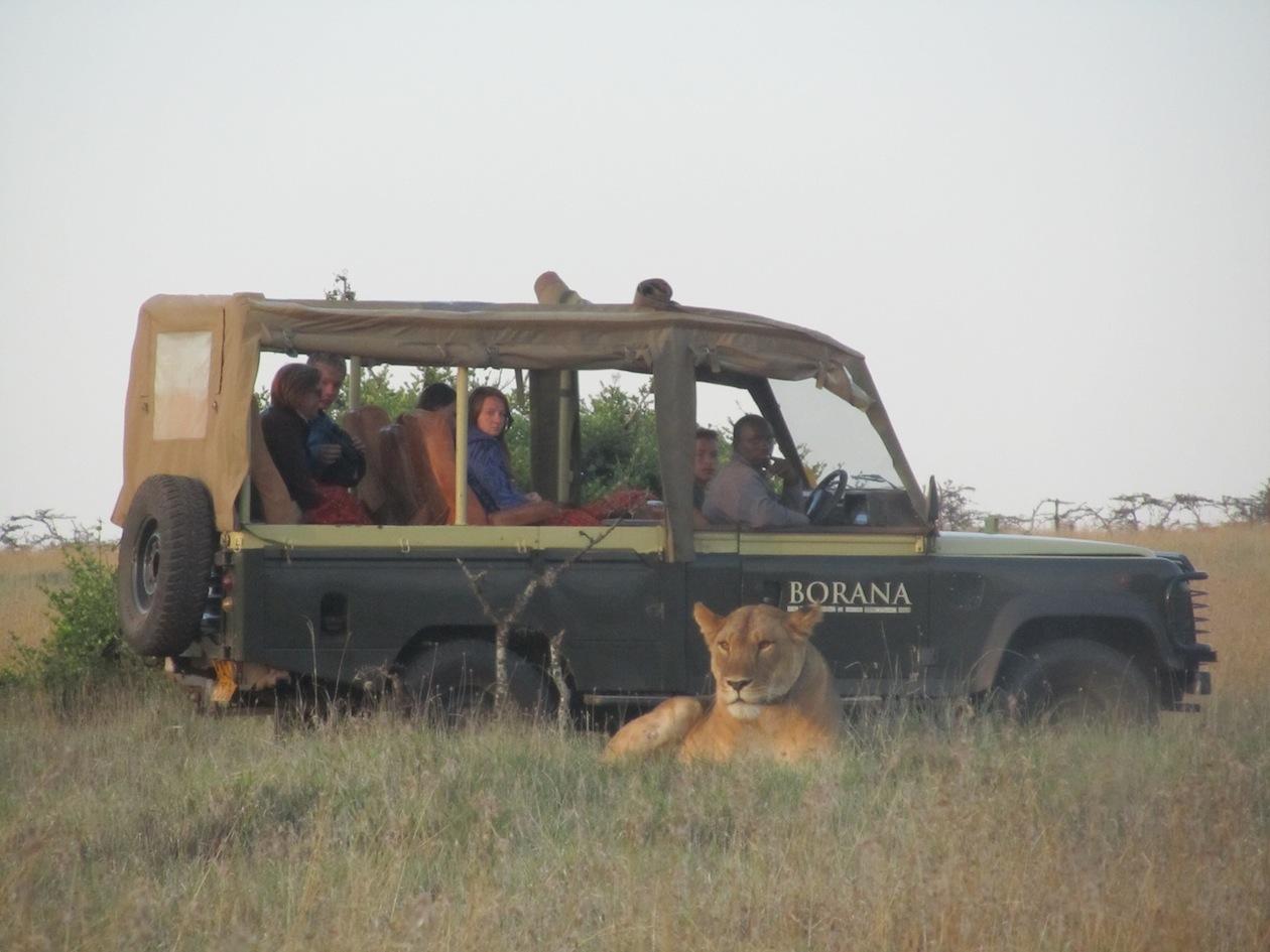 2010-08-07-lions.jpg