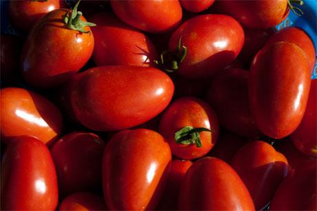 2010-08-12-tomatoes.jpg