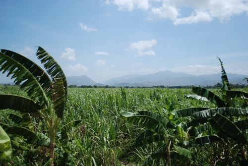 2010-08-29-sugarcaneleogane.jpg