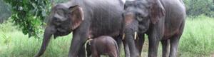 2010-09-01-elephants1.jpg