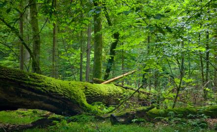 2010-09-01-woods.jpg