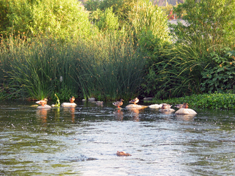 2010-09-15-L.A.River.JPG