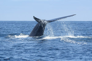 could whales help curb heat-trapping emissions