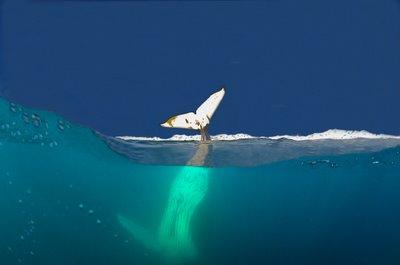 2010-09-22-whale.jpg