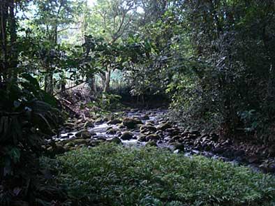2010-10-11-junglewithriverrocks1.jpg