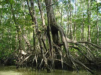 2010-10-11-mangrove.jpg