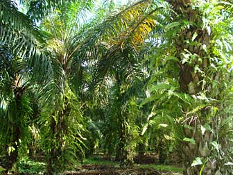 2010-10-11-palmtreeforest.jpg