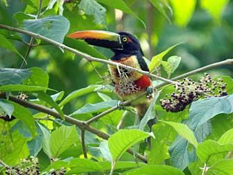 2010-10-11-toucan.jpg