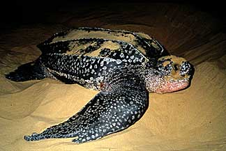 2010-10-11-turtle.jpg