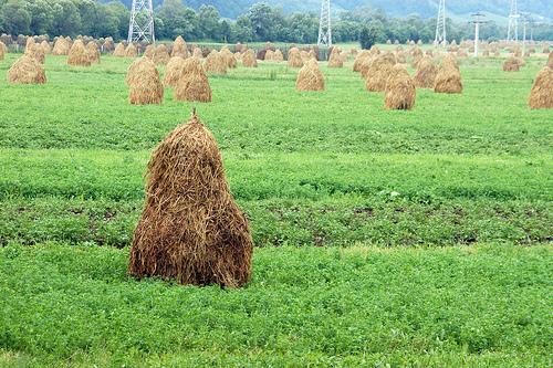 2010-10-20-Haystack.jpeg