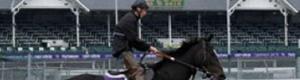 2010-11-05-pullhorse.jpg
